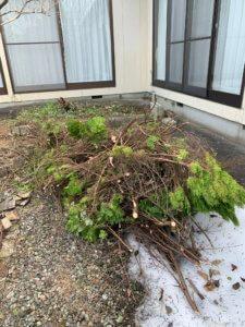 富山県の剪定した枝の回収前現場写真