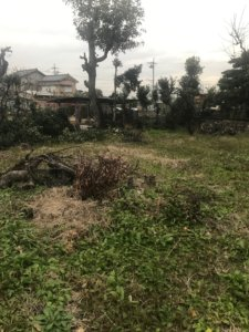 富山県、伐採後の剪定枝の回収現場写真