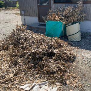 富山県滑川市、剪定枝の回収現場写真