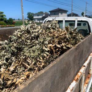富山県滑川市の剪定後の枝葉の回収、トラックに積み込みをした後の写真